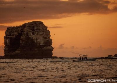 contender-28t-OCEARCH_Galapagos_Darwin_4261